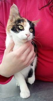 Katze Lisa 5 Monate kastriert