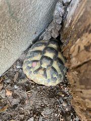 mehrere Jungen THH Schildkröten 2015