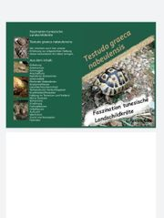 testudo graeca nabeulensis tunesische landschildkröten