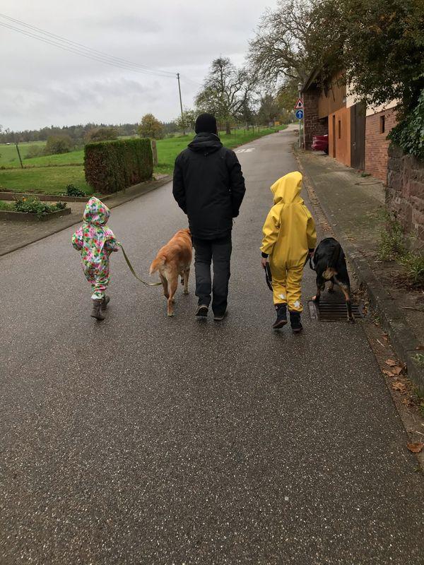 Kinderbetreuung Hausaufgaben Hunde