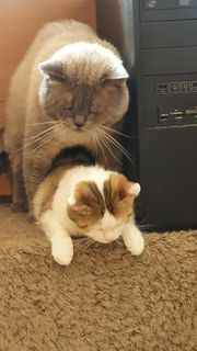 Frankfurt katzenbabys zu verschenken Katze Bild: