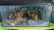 Aquarium mit viel Zubehör