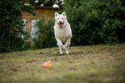 Elbrus sucht sein Zuhause