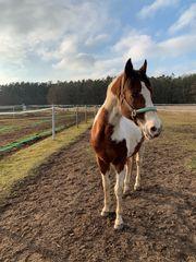Pferd sucht Reiterfreund