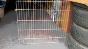 Gitter für Kaninchengehege Transportbox