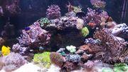 Korallen Beckenauflösung