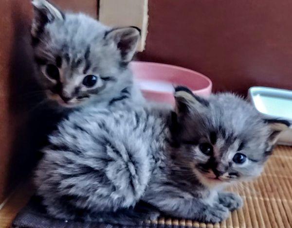 Zauberhafte Edel-Mix-Kitten suchen neuen Wirkungskreis