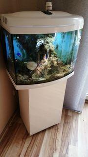 Meerwasser Aquarium 500l
