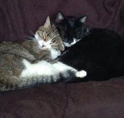 2 ganz bezaubernde Katzenmädchen brauchen