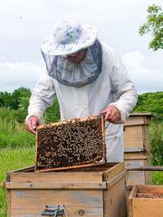 Suche Ort für Bienenvolk