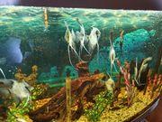 Juvel Aquarium