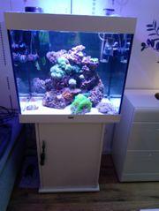 Aquarium Meerwasser LIDO 200 Liter