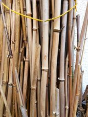 Bambus Stangen
