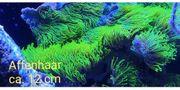 kleines Korallenpaket zur Abgabe