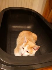 XL Katzentoilette Katzenklo
