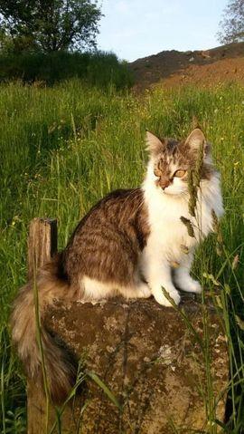 Bild 4 - Katze vermisst - Schwarzach