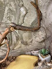 Terrarium mit agamen und Zubehör