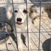 Schnuckiputzi-Hanni sucht dringend ihre Familie