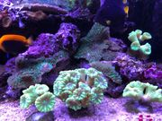 Korallen und Korallenableger Meerwasser
