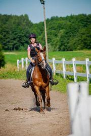 Reitpony Stute Pony