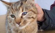 Katzenmädchen Mira sucht ihre Dosis