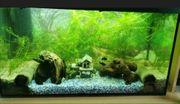 Süßwasseraquarium komplettset mit viel Zubehör