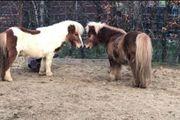Offenstall für Shetty oder Pony