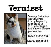 Katze vermisst in Lustenau