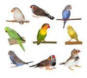 Nehme noch Vögel in meinen