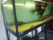 Aquarium 2 Meter Mal 60