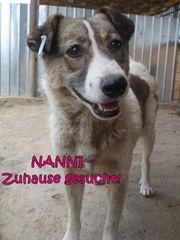 Notfall Nanni sucht dringend ein