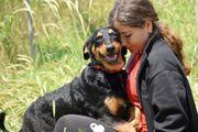 Frano 8 Monate - Dobermann-Mix - Tierhilfe