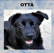 OTTA - hat es gerade noch