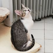 Katzenjunge Ali ist startklar