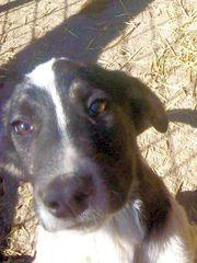 Jasper lieber Hundebub sucht sein