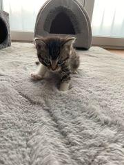 süße Babykatze abzugeben