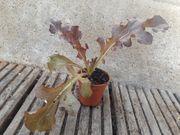 Verschenke Gemüsejungpflanzen