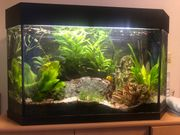 Komplettes Aquarium mit viel Zubehör