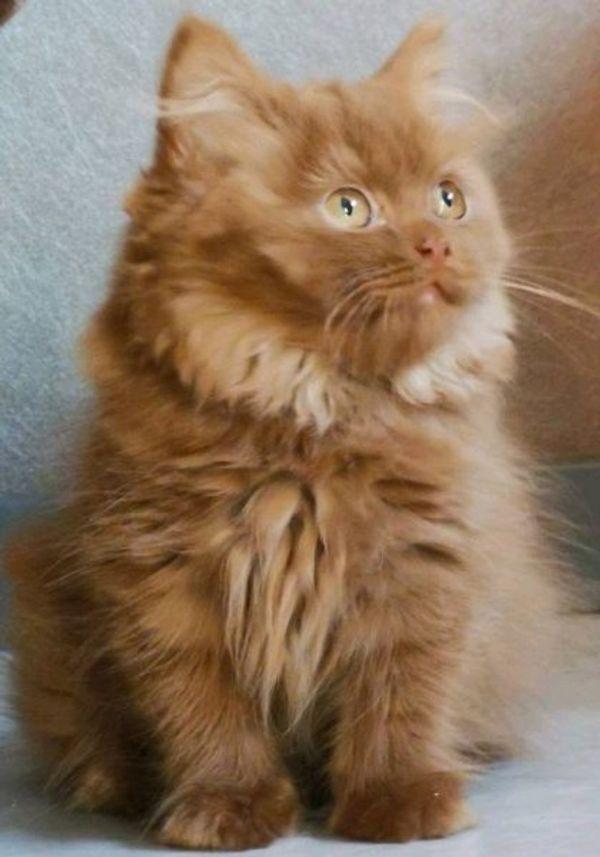 Kleine süße Kätzchen suchen neues