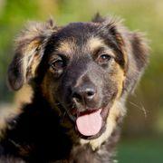 Belana 5 Monate - Mischling - Tierhilfe