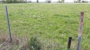 Ackerland - Wiese -