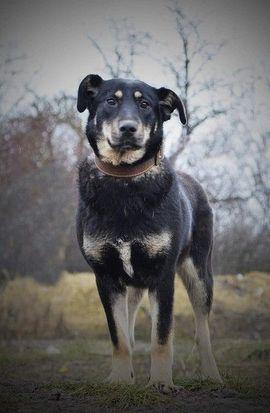 Hunde - VENA - liebt uns Menschen ist