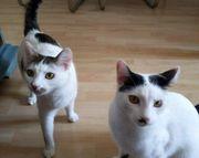 Molly und Fio - ein liebenswertes