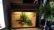Eckterrarium mit 3 Geckos
