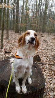Private Hundebetreuungmit Familienanschluss
