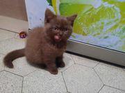 Babykatzen BKH abholung sofort