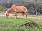 Umgang mit dem Pferd