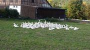 Frische Gänse Puten Enten und