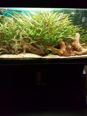 Aquarium 200 L mit Außenfilter