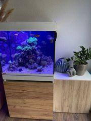 Meerwasseraquarium Komplettset EHEIM Incpiria Marine